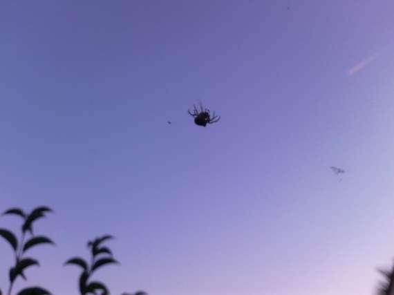 Une araignée du soir 30_jui12
