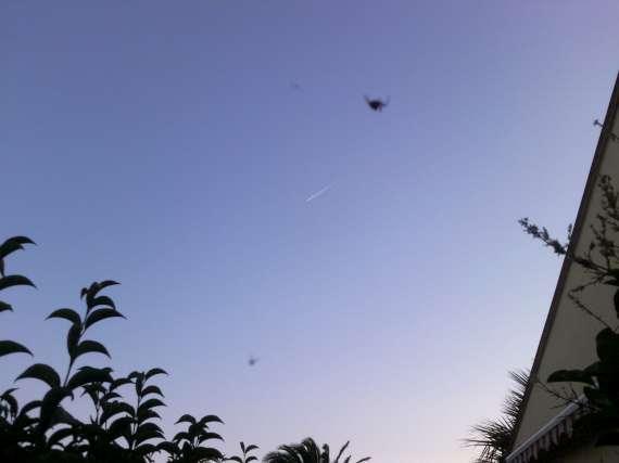 Une araignée du soir 30_jui13