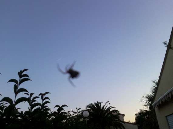 Une araignée du soir 30_jui14