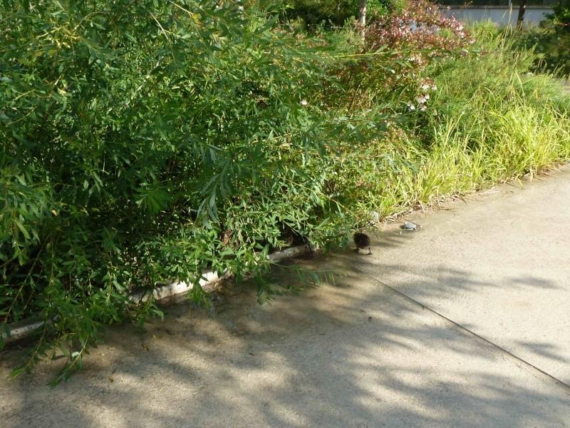 Canards du parc - Page 2 P1220028