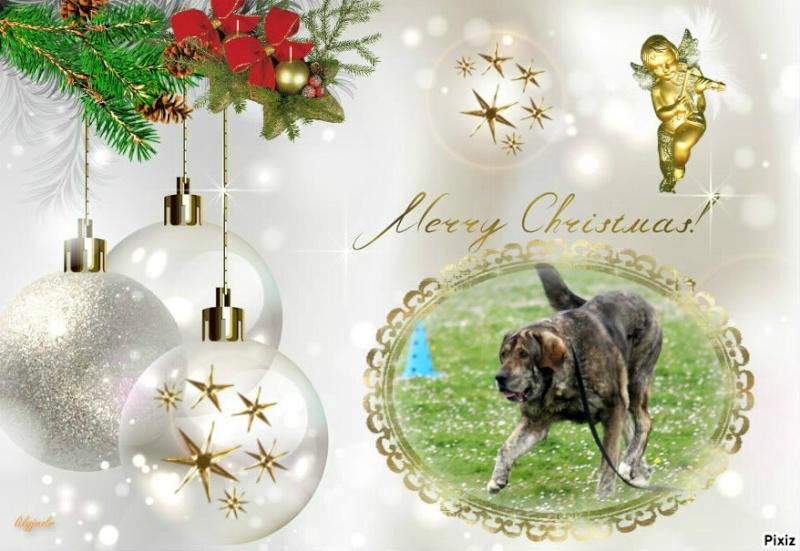 Bonne fêtes de Noel Pixiz_14