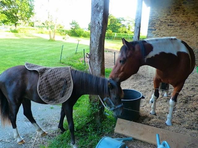 cheval - Et si vous étiez obligés de travailler votre cheval, le feriez-vous ? 015f11