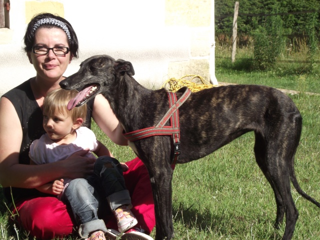 "Masha ,toute petite galga à l'adoption ""Scooby France"" Adoptée  - Page 3 Chiens82"