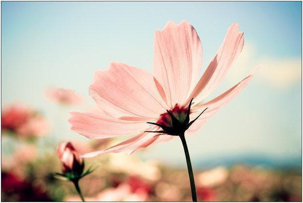 Les fleurs... Dldldl11