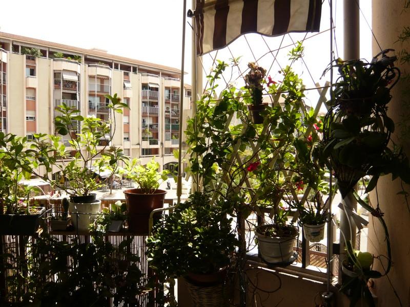 """quelques floraisons et mon """"jardin"""" en terrasses P1040423"""