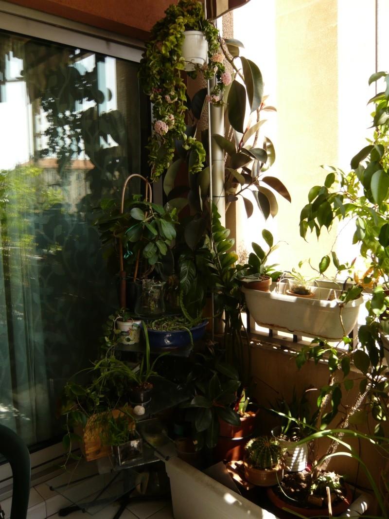"""quelques floraisons et mon """"jardin"""" en terrasses P1040424"""