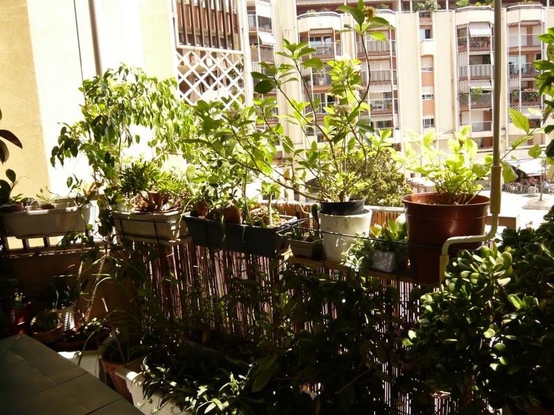 """quelques floraisons et mon """"jardin"""" en terrasses P1040426"""