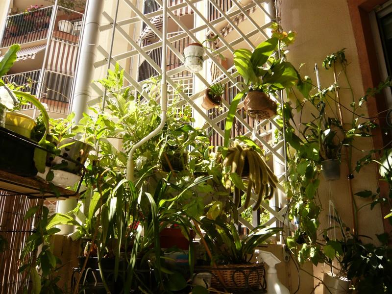 """quelques floraisons et mon """"jardin"""" en terrasses P1040428"""