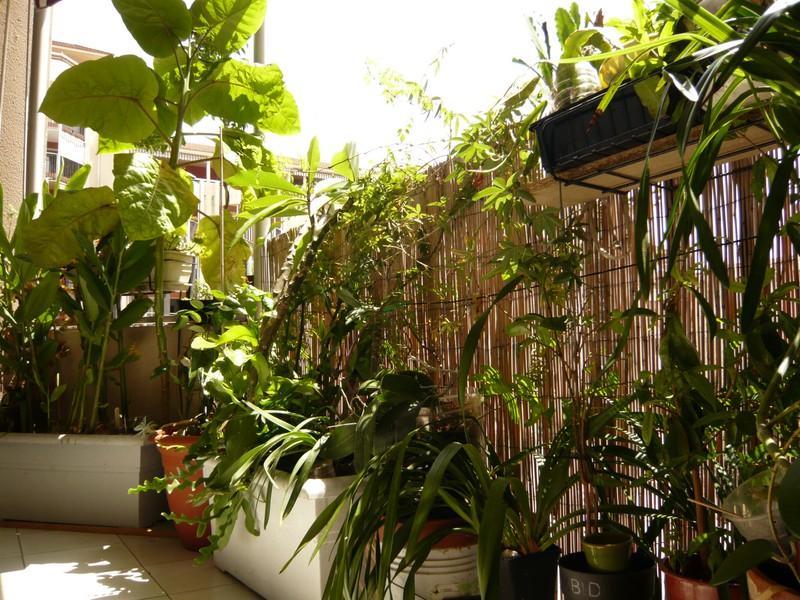 """quelques floraisons et mon """"jardin"""" en terrasses P1040429"""