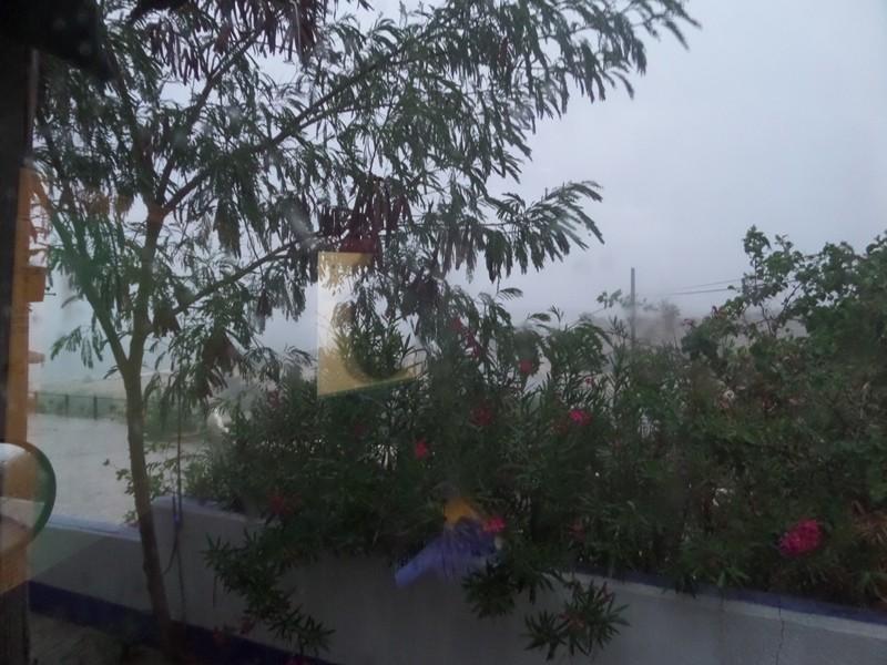 hurricanes 2014 Sam_0313