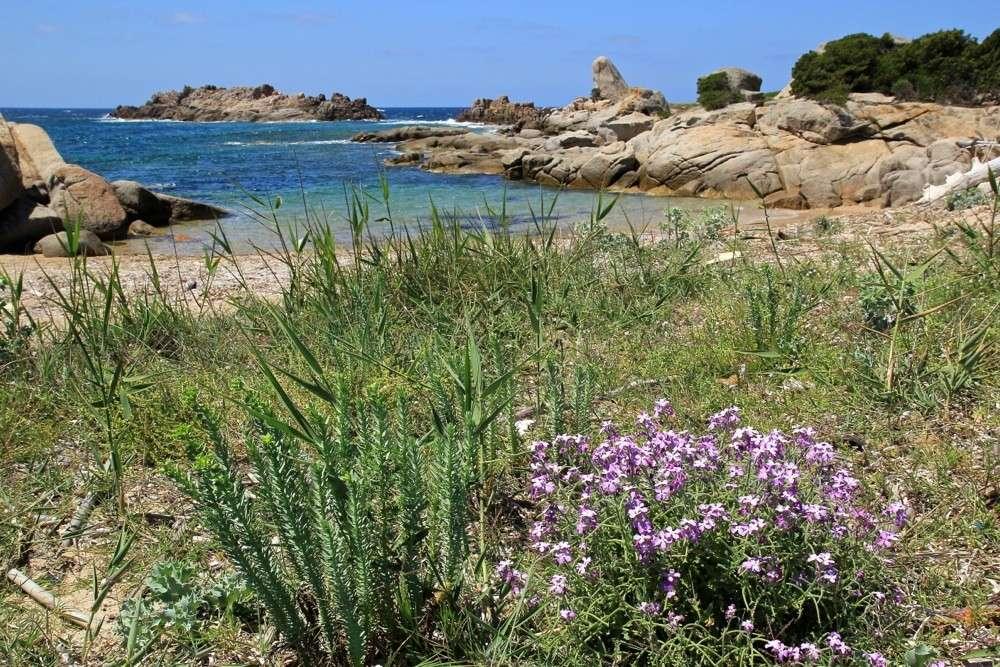 Figari - Sud Corse 2014 Img_1012