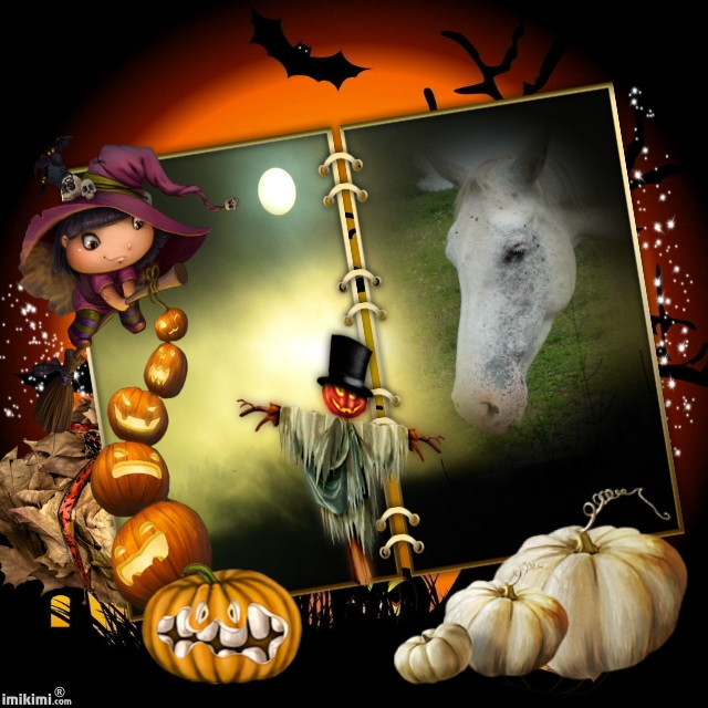 CONCOURS PHOTOS : Halloween chez les chevaux Happy_11