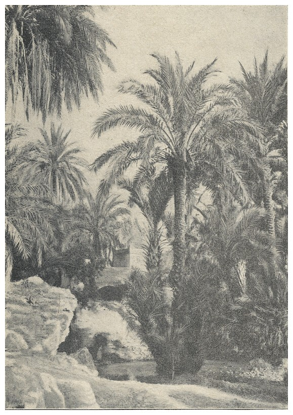 Roland CHARMY : Images marocaines. (1935) A_imag35