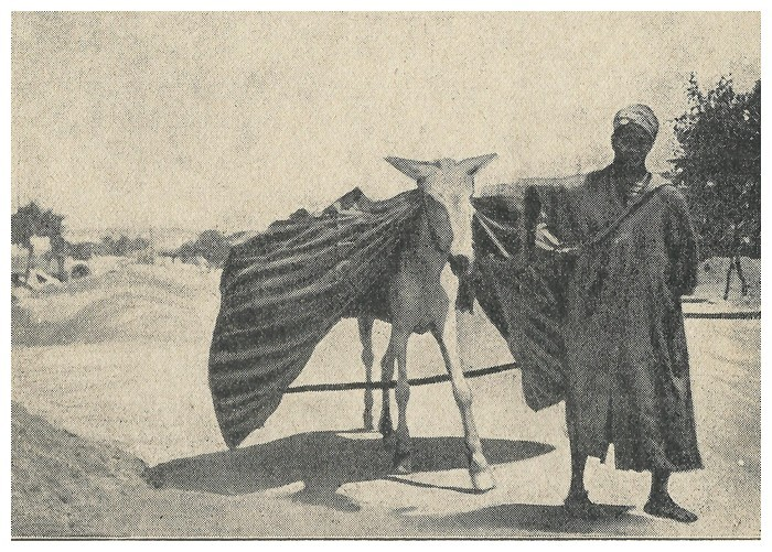 Roland CHARMY : Images marocaines. (1935) - Page 2 A_imag41