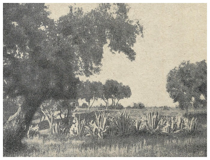 Roland CHARMY : Images marocaines. (1935) - Page 2 A_imag43