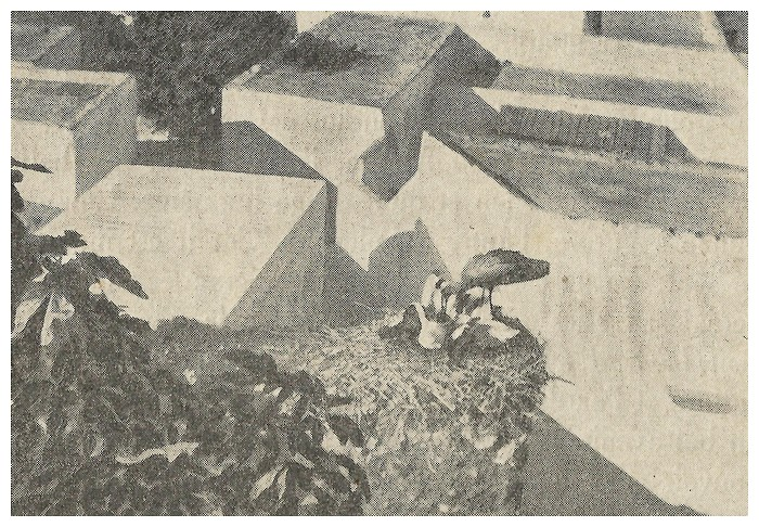 Roland CHARMY : Images marocaines. (1935) - Page 3 A_imag53