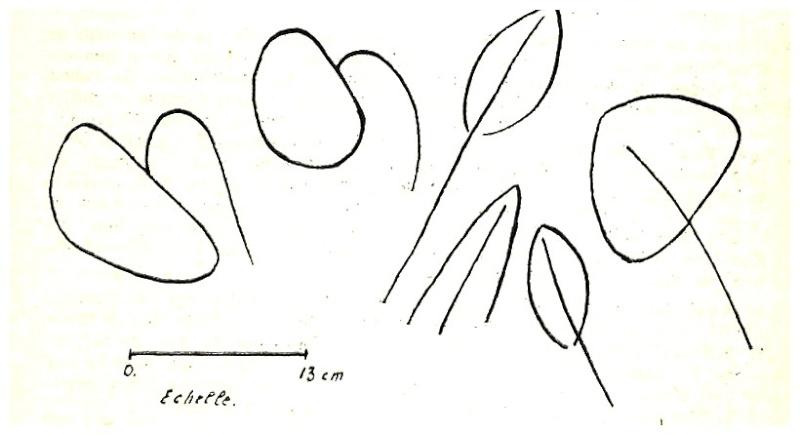 Les grandes lignes de la préhistoire marocaine - Page 3 Antoin21