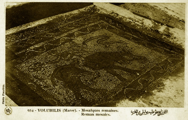 A LA DECOUVERTE DE VOLUBILIS Baasca44