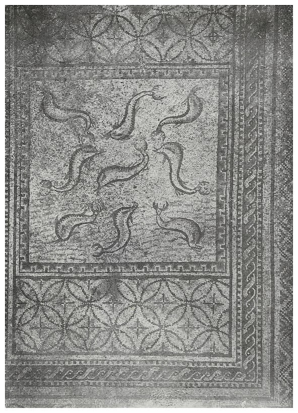 A LA DECOUVERTE DE VOLUBILIS - Page 2 Mosaiq11