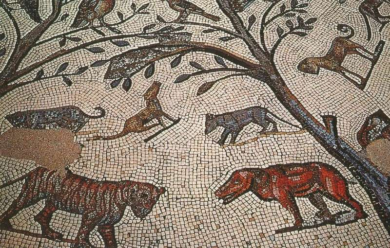 A LA DECOUVERTE DE VOLUBILIS - Page 2 Mosaiq13