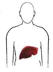 Kab mob siab B (Hepatits B) S110