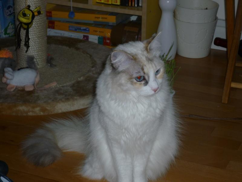 LOTUS (Stella) et LILOU (Joy) - Page 3 P1000613