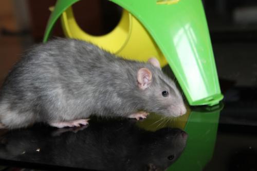 [Au Bazar des NAC] Jackpot adorable ratou bleu Jackpo10