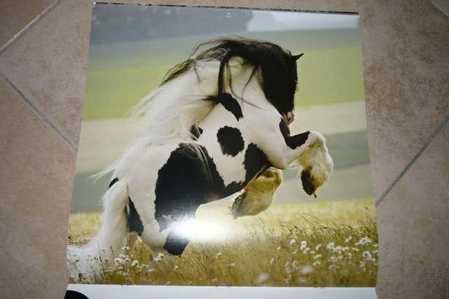 Calendriers chevaux 2009 et  2010 P1230012