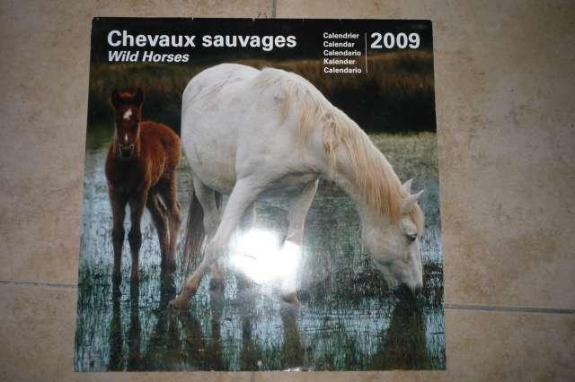 Calendriers chevaux 2009 et  2010 P1230013