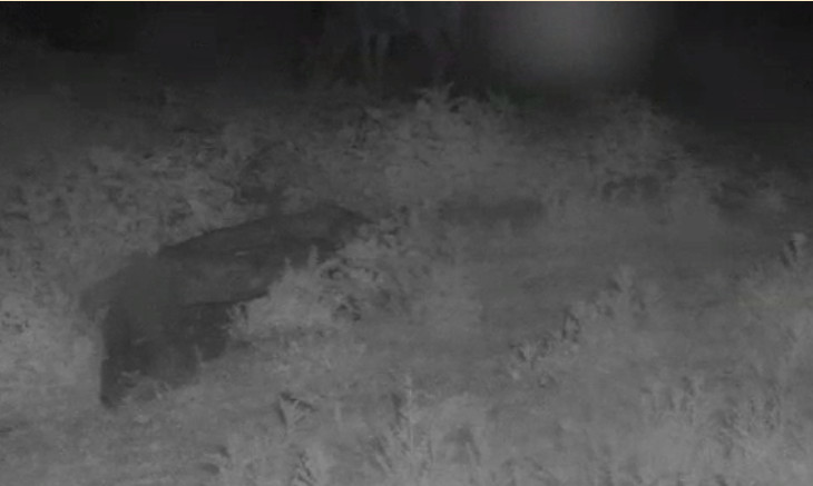 Fox Cam in the Netherlands - Page 2 2014-010