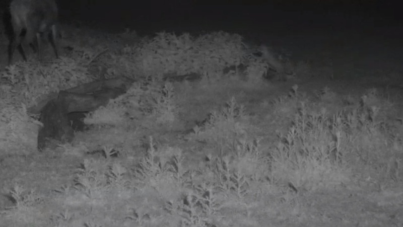 Fox Cam in the Netherlands - Page 2 2014-011
