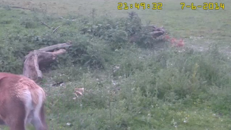 Fox Cam in the Netherlands - Page 2 2014-023