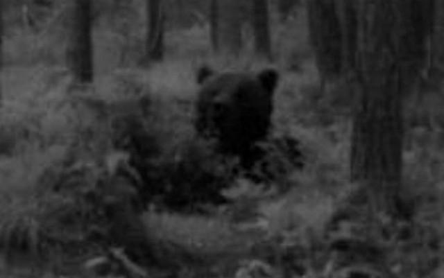 Alataguse Bear Cam 2013 - Page 5 2014-025