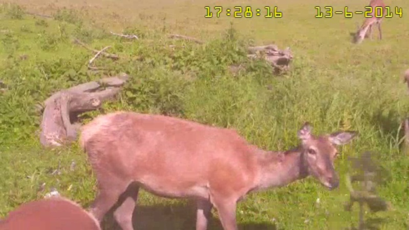 Fox Cam in the Netherlands - Page 2 2014-027