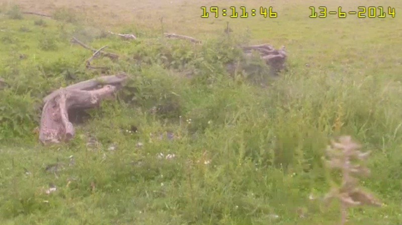 Fox Cam in the Netherlands - Page 2 2014-028