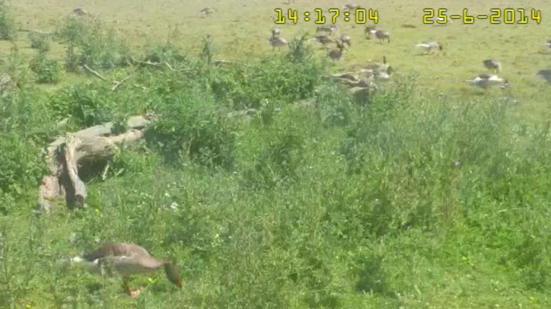 Fox Cam in the Netherlands - Page 2 2014-037