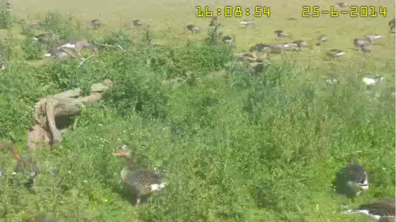 Fox Cam in the Netherlands - Page 2 2014-040