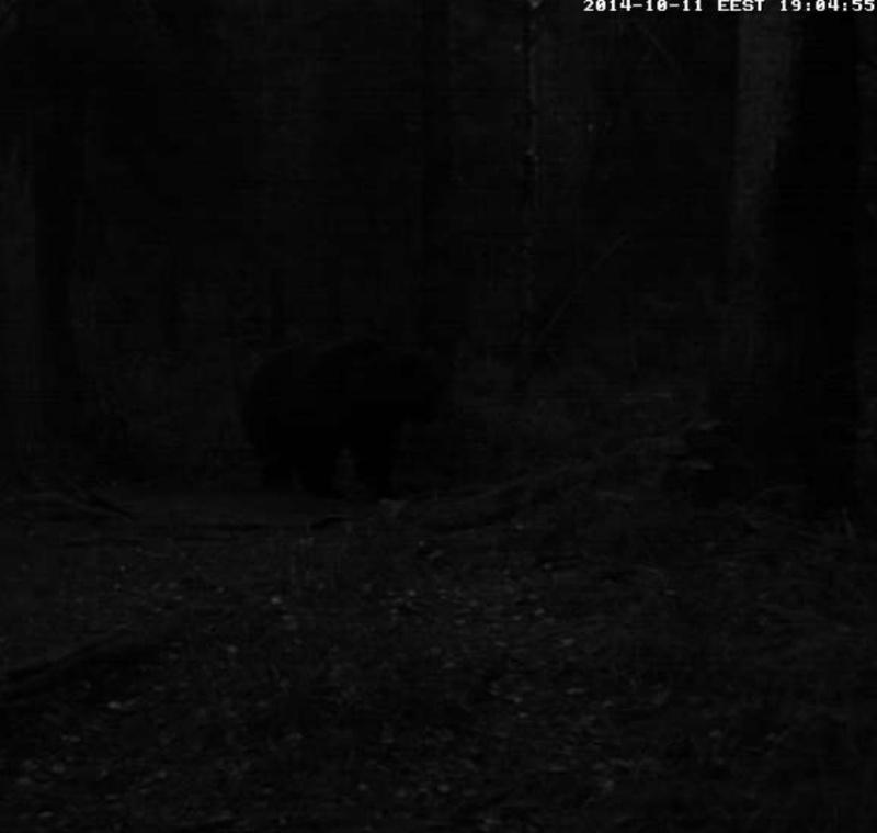 Alataguse Bear Cam 2013 - Page 6 2014-116