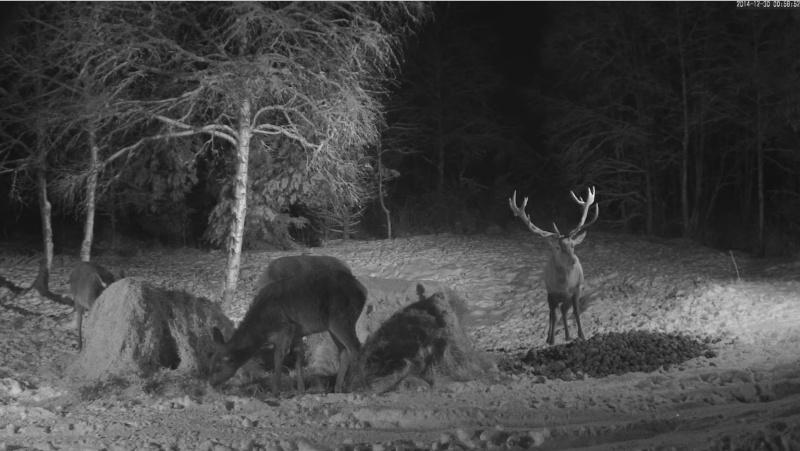 Red Deer Cam (Saarema Island)  - Page 18 2014-172