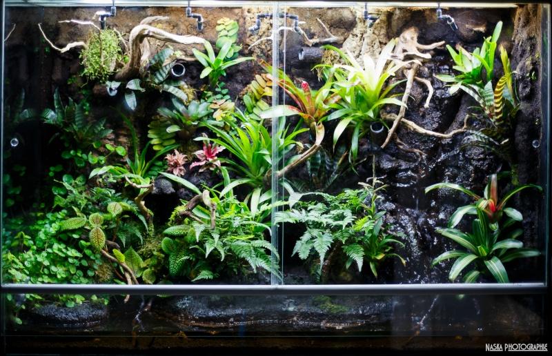 Gros projet Aqua-terrarium pour dendrobates - Page 11 Img_4810