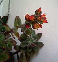 une fleur à découvrir par blucat (21juillet)trouvée par ajonc 200px-10
