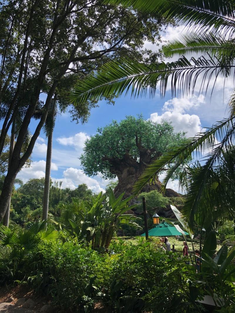 Trip Report : WDW et Universal - Toussaint 2019 en tête à tête avec ma  fille   - Page 2 Img_1720