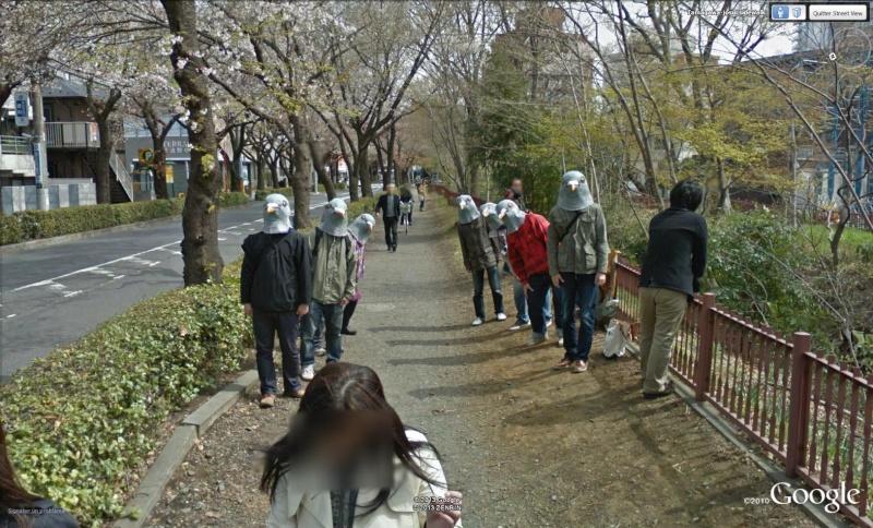 Mi-homme , mi-pigeon Musashino Japon Pigeon10