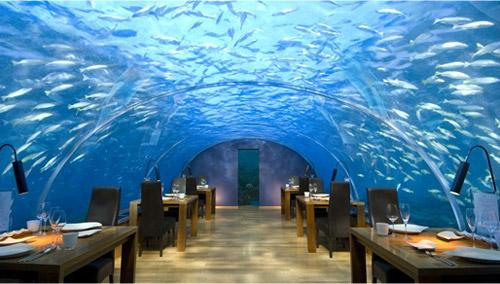 Restaurant sous-marin Rangali - Maldives Ran210