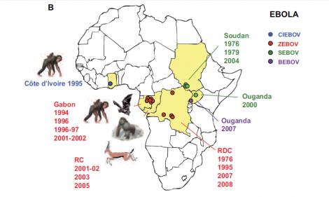 Le virus Ebola Virus-10