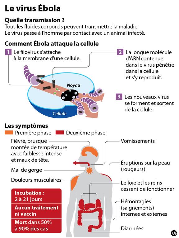 Le virus Ebola Virus-11