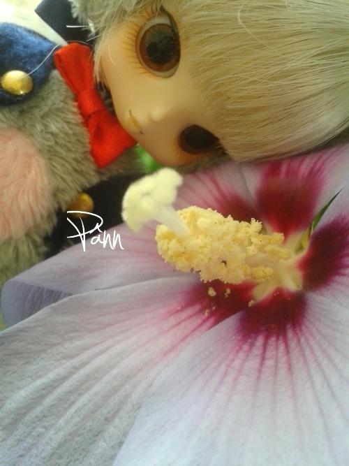 [ Tori's House ] First Meeting ~ |Pullip|TaeYang|Isul|Little Mc910