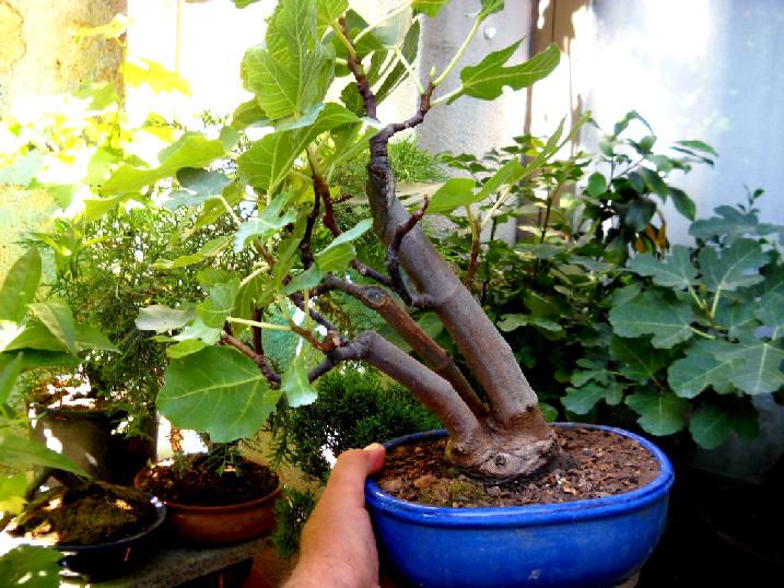 Da Macro a Micro - Ficus carica a go-go - Pagina 2 Dscn2513