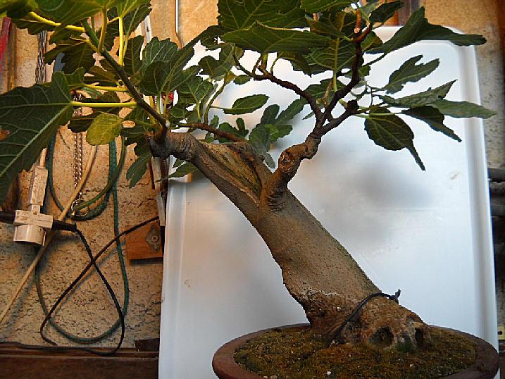 Da Macro a Micro - Ficus carica a go-go - Pagina 2 Dscn2515