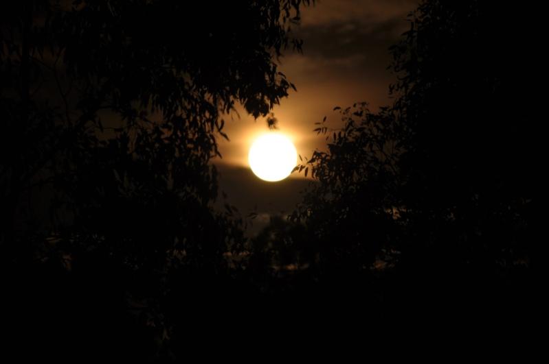 The Full Moon 01911